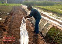 Diễn Châu: Nâng cao hiệu quả sản xuất vụ đông