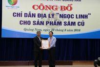 Bộ Khoa học- Công nghệ trao giấy chứng nhận đăng ký chỉ dẫn địa lý 'Ngọc Linh' cho sản phẩm sâm củ