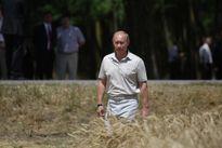 Nga và chiếc chìa khóa mang tên 'Lúa mì'