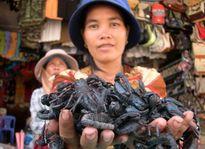 Dùng côn trùng làm mồi nhậu: Vong mạng vì món 'khoái khẩu'