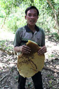 Tuyệt kỹ săn mật ong rừng siêu độc đáo của người ARem