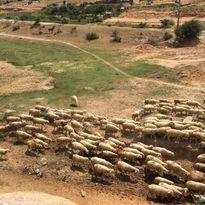 3 cánh đồng nuôi cừu ở Việt Nam, tới đây chụp kiểu gì cũng có ảnh xinh!