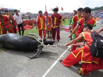 Những hình ảnh ấn tượng trong lễ hội Chọi trâu Đồ Sơn 2016