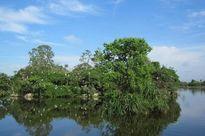 Bình Định kêu gọi 30 triệu USD bảo tồn khu du lịch sinh thái Cồn Chim