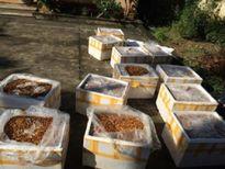 Nghệ An: Phát hiện xe khách chở 12 thùng xốp nhộng tằm bốc mùi