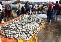 Bộ trưởng Bộ TN&MT chỉ đạo làm rõ nguyên nhân gần 50 tấn cá lồng chết bất thường ven biển Nghi Sơn