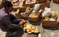 Quảng Ninh tiêu hủy 3 tấn hoa quả và thực phẩm nhập lậu từ Trung Quốc
