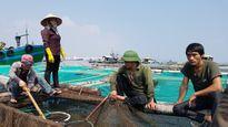Cá chết bất thường ở Thanh Hóa: Chưa rõ nguyên nhân