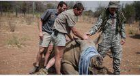 Người Việt bị bêu tên trên tạp chí Time khi đẩy loài tê giác châu Phi đến bờ vực tuyệt chủng