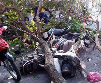 TP HCM: Cây xanh lại gãy đổ, đè 3 người đi đường