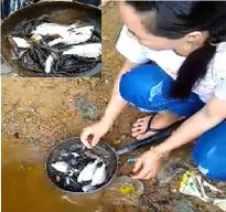 Hà Tĩnh: Nước chuyển màu đỏ, cá chết trắng trên sông