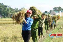 Hơn 1.000 lượt ĐVTN Hương Sơn giúp dân thu hoạch lúa
