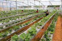 Lâm Đồng thiếu kinh phí chống hạn
