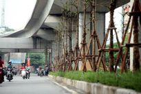 Hà Nội trồng cây dưới gầm đường sắt trên cao: Lãng phí?