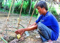 Ngôi làng trồng bí đao kỳ lạ nặng nửa tạ ở Việt Nam