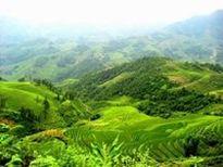 Bảo vệ, phát triển rừng bền vững huyện Mường Nhé