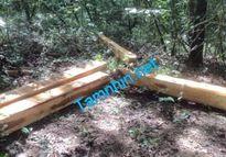 Thủ phạm tàn sát 29 cây gỗ Giáng hương ở Khu bảo tồn thiên nhiên Ea Sô vẫn bặt vô âm tín