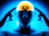 Phát hiện cách bộ não chọn giữa làm và hưởng
