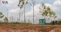 Cần chuyển đổi 100.000 ha rừng cao su nhưng đừng biến tướng trục lợi