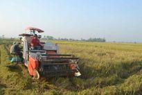 Thanh Hóa khẩn trương thu hoạch lúa mùa tránh bão số 7