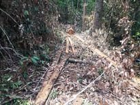 Gia Lai: Mất rừng, hạt trưởng hạt kiểm lâm bị kiểm điểm