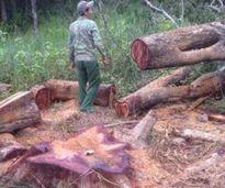 Báo động tình trạng xâm hại Khu bảo tồn thiên nhiên Ea Sô