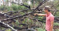 Hơn 200 hec-ta rừng ở Đắc Nông bị lấn chiếm và sang nhượng trái phép