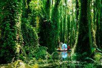 Những khu rừng tràm xanh ngắt mùa nước nổi