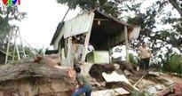Bình Thuận: hơn 20 quán ăn ven biển bị sập đổ vì triều cường