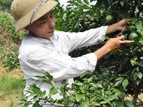 Từ tỉnh Hưng Yên về Nghệ An làm trang trại thu 500 triệu/năm