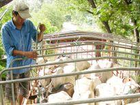 Chủ động ngăn chặn dịch gia súc, gia cầm dịp cuối năm