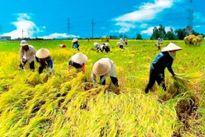 Nông dân Việt – nhóm người dễ bị tổn thương