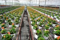 Lâm Đồng: Góp vốn lập Quỹ hỗ trợ khởi nghiệp