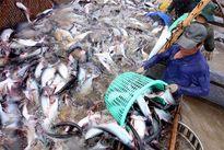 Dự báo xuất khẩu thủy sản năm 2016 đạt 7 tỷ USD