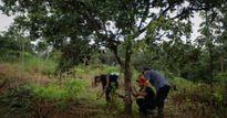 Khởi tố vụ bắn chết 3 bảo vệ rừng ở Đắk Nông