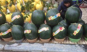 Hà Nội: Dưa hấu 15kg 'đổ bộ' xuống phố ngày cận Tết