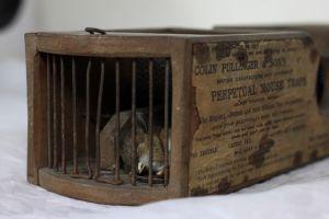 Phát hiện chú chuột chết trong bẫy 155 năm tuổi