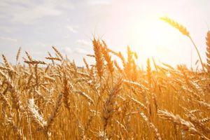 Nhiều mặt hàng nông sản giảm giá vì đồng USD mạnh lên