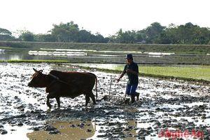 Nông dân mang Tết ra đồng