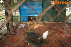 Đàn khỉ trụi lông, mốc trắng ghê người ở Vườn thú Hà Nội