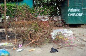 Sau Tết, rác đào, quất tràn ngập phố phường Hà Nội