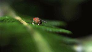 Sởn gai ốc cuộc sống sinh tồn của thế giới động vật (2)