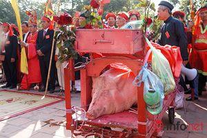 Chém lợn Ném Thượng: Giảm bạo lực nhưng vẫn thiếu tính nhân văn