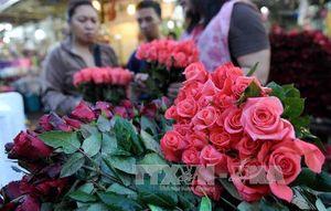 """Hoa hồng tăng giá """"đột biến"""" trong dịp Lễ tình nhân 2016"""