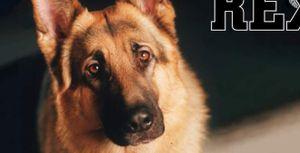 Rex – chú chó thám tử mãi sống trong lòng thế hệ 8x, 9x