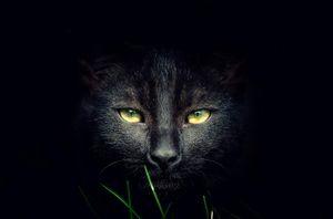 [Caturday] 24 ảnh chụp chân dung mèo trắng và đen đẹp tổng hợp từ 500px