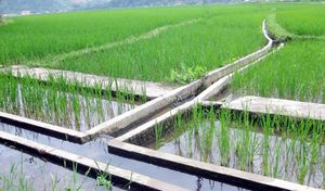 Các địa phương nỗ lực hỗ trợ nông dân vùng hạn, mặn