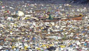 Các đại dương sẽ không còn đủ oxy cho sinh vật biển