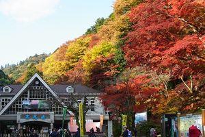 Đến Nhật Bản, lên núi Takao ngắm lá phong đỏ