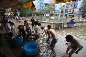 Cá tung tăng bơi lội trên đường phố Thủ đô, dân hò nhau đi bắt
